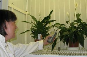 luchtzuiverende plant